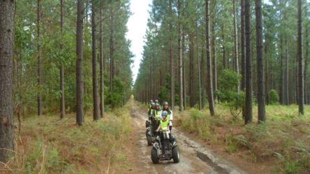 Tsitsikamma Forest